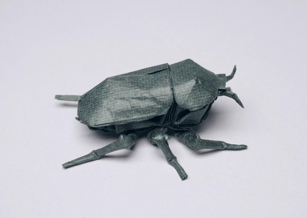 chrysina beetle